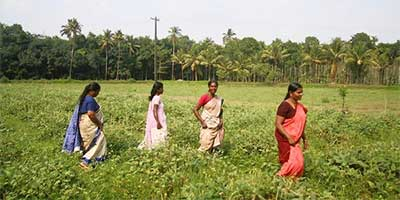 Participants in the Kudumbashree program walk through a field in southern India's Kerala state. The program teaches women farming and other skills, giving them experience in managing, organizing and making tough economic decisions. (Mark Magnier, Los Angeles Times / September 7, 2013)