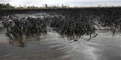Oil slick flows at the base of the mangrove at Bodo creek, outside Nigeria's oil hub city of Port Harcourt. Prosperity has flowed from Ogoniland, one of Africa's earliest crude oil | Photo: REUTERS/Akintunde Akinleye