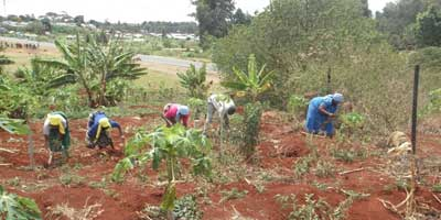 Digging-the-shamba