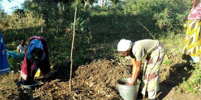 Green-manure-project